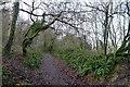 ST8210 : The Wessex ridgeway path climbing Shillingstone Hill by Tim Heaton