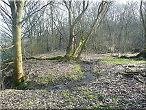 SE0726 : Stream in the woodland at Brackenbed, Wheatley, Halifax by Humphrey Bolton