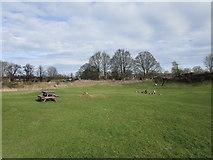 SK8608 : The Castle grounds, Oakham by Jonathan Thacker