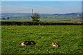ST0216 : Mid Devon : Grassy Field by Lewis Clarke