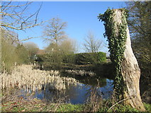 SU6462 : Pond outside the church at Silchester by Peter S