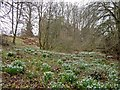 NH5849 : Snowdrops below the Redcastle by valenta