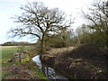 SO9562 : Drain on the edge of Butlers Wood, Hanbury by Jeff Gogarty