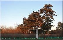 TL9927 : Via Urbis Romanae, Mile End by David Howard