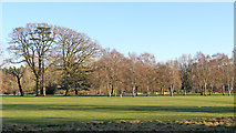 SJ8000 : Golf Course in Patshull Park, Staffordshire by Roger  Kidd