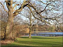 SJ8000 : Patshull Park in Staffordshire by Roger  Kidd