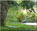 SD4756 : Heron at New Park Bridge No 89 by Mat Fascione