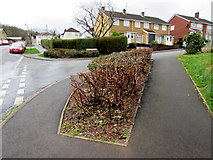 ST3090 : Trimmed bushes on a Malpas corner, Newport by Jaggery