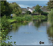 SD4861 : Lancaster Canal in Lancaster by Mat Fascione