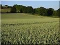 SU5177 : Farmland, Hampstead Norreys by Andrew Smith