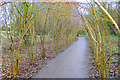 ST9700 : Tree Tunnel on the Woodland Walk by Des Blenkinsopp