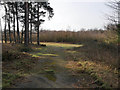 TL8094 : Forest track junction by David Pashley