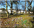TQ2695 : Spring Flowers by Lyonsdown Road by Des Blenkinsopp