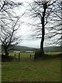 ST1636 : Roofs of Quantock Farm and Great Wood beyond by David Smith