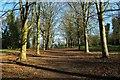 SJ3248 : Avenue of Trees on Erddig Castle Bailey by Jeff Buck
