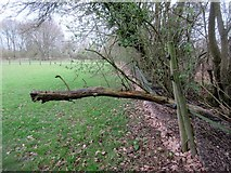 TQ0521 : Dead tree across footpath by Peter Holmes