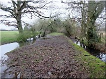 TQ0521 : Path between flooded drainage ditches by Peter Holmes