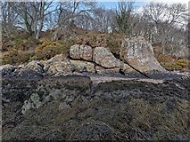 NH6750 : Rock formation on the Moray Firth by valenta