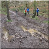 SE4208 : Muddy track in West Haigh Wood by steven ruffles