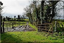 H6058 : Muddy lane, Tullylinton by Kenneth  Allen