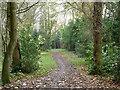 TQ2255 : Path, Banstead Heath by Robin Webster
