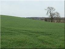 SE1986 : Hillside, north of Helming by Christine Johnstone