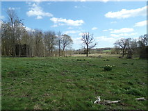 TM3669 : Woodland near Sibton Abbey Ruins by Adrian Cable
