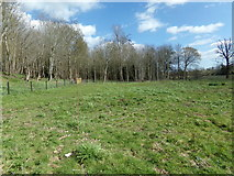 TM3669 : Abbey Wood, Sibton by Adrian Cable
