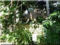 NZ3956 : Stegosaurus in Sunderland Winter Gardens by Oliver Dixon