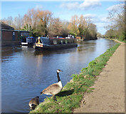 TQ1281 : Grand Union Canal at Southall by Des Blenkinsopp