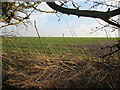 SE9255 : Through  the  hedge  to  Christcross  Close by Martin Dawes