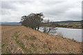 NH9821 : Flood Bank by Anne Burgess