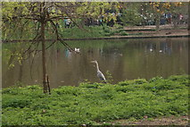 TQ2979 : View of a heron by the lake in St. James's Park by Robert Lamb