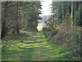 TL7893 : Looking to the end of grassy path by David Pashley