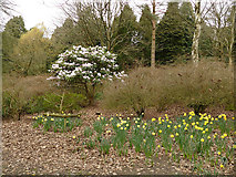 SE2741 : Daffodils and blossom in Golden Acre Park by Stephen Craven