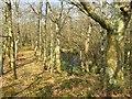 SS6994 : Elevated causeway on the edge of Crymlyn Bog by Alan Hughes
