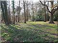 TL9197 : Small Oak Wood by David Pashley