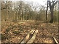 SO4787 : Coppicing, Long Coppice by Richard Webb