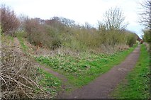 NO4202 : Serpentine Walk, Lower Largo by Bill Kasman