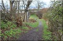 NO4202 : The Serpentine Walk, Lower Largo by Bill Kasman