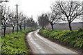 TM2134 : Tree-lined lane to Ness Farm, Erwarton by Simon Mortimer