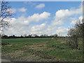 TF9307 : Winter wheat on High Green, Bradenham by Adrian S Pye