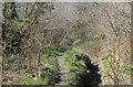ST1485 : Woodland footpath on flank of Twyn Garwa by M J Roscoe