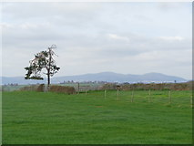 SO8843 : Lone tree with the distant Malvern Hills by Jeff Gogarty