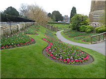 SU9949 : Guildford Castle Grounds: spring flowers (a) by Basher Eyre