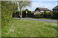 SZ2893 : Roadside daisies and dandelions at the end of Everton Road by David Martin