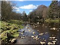 NY9839 : The River Wear, Stanhope by Bill Henderson