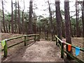 SD2708 : Squirrel Walk at Formby by Steve Daniels