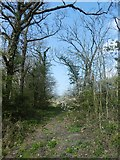 SX8390 : Short access track to a field near Rughouse by David Smith