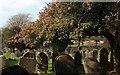 SX9066 : Blossom, Torquay old cemetery by Derek Harper